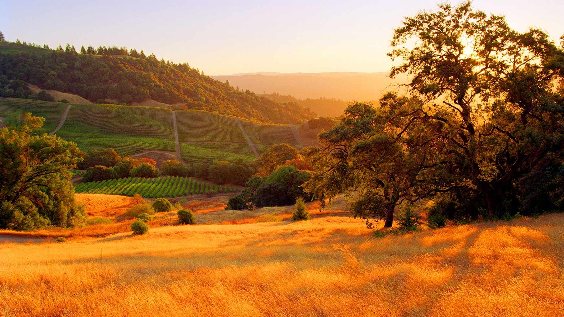 California Wine Fair 2017