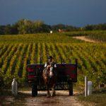 Vine Yard, Wine Events, Spear Communications