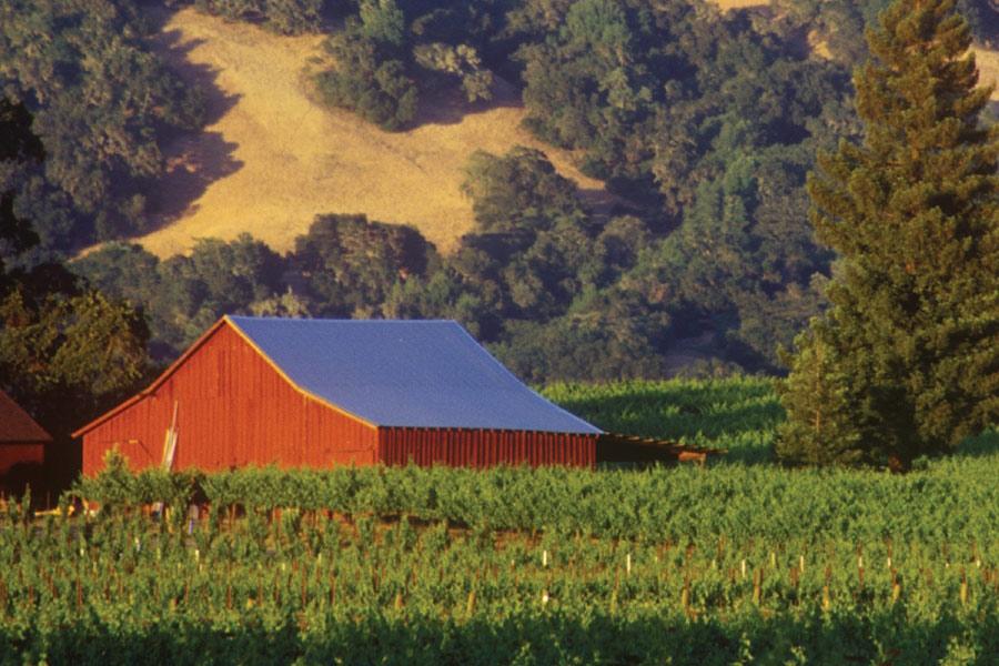 DREAM BIG IN CALIFORNIA