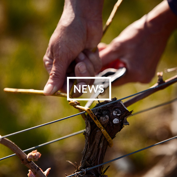 Spear Communications Wine Events - News